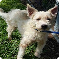 Adopt A Pet :: CODY - Houston, TX