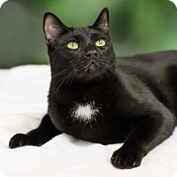 Adopt A Pet :: King Kong - Houston, TX