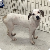 Adopt A Pet :: Fizzy in CT - Manchester, CT