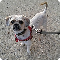 Adopt A Pet :: Chewy - Bronx, NY