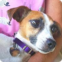 Adopt A Pet :: MIA - Terra Ceia, FL