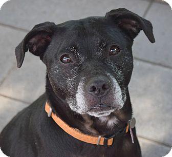 Labrador Retriever Mix Dog for adoption in Pontiac, Michigan - Rita