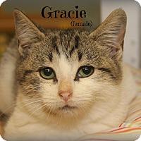 Adopt A Pet :: Gracie - Glen Mills, PA