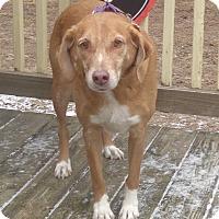 Adopt A Pet :: Tic Tac - West Chicago, IL