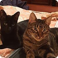 Adopt A Pet :: Weezer & Tom Tom - Harrison, NY