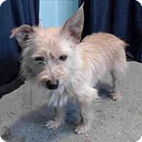 Adopt A Pet :: Dash - Encino, CA