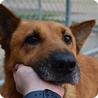 Adopt A Pet :: Dixie - Tulsa, OK