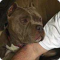 Adopt A Pet :: Bruce - Lincoln, CA
