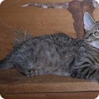 Adopt A Pet :: K-Lillian12-Rupert - Colorado Springs, CO