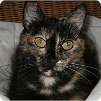 Adopt A Pet :: Ivy.....needs spay sponsor - Morris, PA