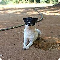 Adopt A Pet :: Sophie - hartford, CT