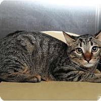 Adopt A Pet :: Koopa - Farmingdale, NY