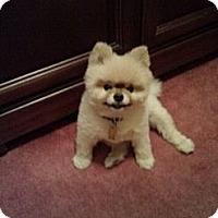 Adopt A Pet :: ACE - Mahopac, NY