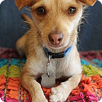 Adopt A Pet :: Tobias - Wytheville, VA