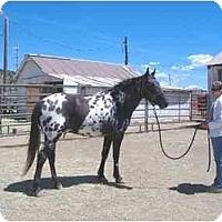 Adopt A Pet :: Bogie - Bayfield, CO