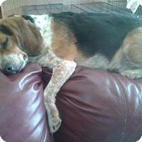 Adopt A Pet :: Lucky Q - Phoenix, AZ