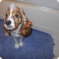 Adopt A Pet :: Emily -Adopted! - Kannapolis, NC