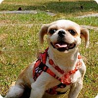 Adopt A Pet :: Pearl - Surrey, BC
