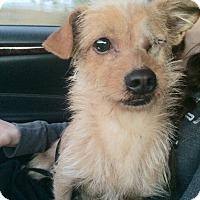 Adopt A Pet :: Captain - Encino, CA