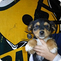Adopt A Pet :: Chloe - Oviedo, FL
