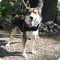 Adopt A Pet :: Gordie - Oakland, AR