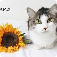 Adopt A Pet :: Arianna - Luling, LA