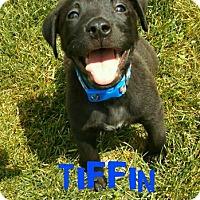 Adopt A Pet :: Tiffin - Sylvania, OH
