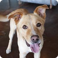 Adopt A Pet :: Ranger - San Antonio, TX