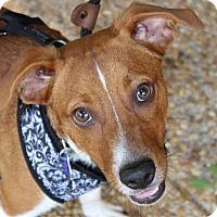 Adopt A Pet :: Bobby - Atlanta, GA