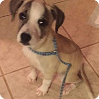 Adopt A Pet :: Sally - North East, FL