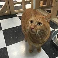 Adopt A Pet :: Curi - Leonardtown, MD