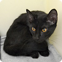 Adopt A Pet :: Nick - Wheaton, IL