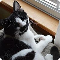 Adopt A Pet :: Ruby - Carlisle, PA