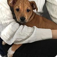 Adopt A Pet :: Juju-ADOPTED! - Tracy, CA