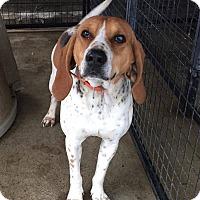 Adopt A Pet :: Elijah - Lewisburg, TN