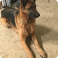 Adopt A Pet :: Argent - Oswego, IL