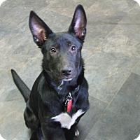 Adopt A Pet :: Meadow - Portland, ME