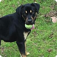 Adopt A Pet :: Freyja - Rincon, GA