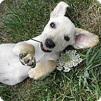 Adopt A Pet :: Zumba - Novi, MI