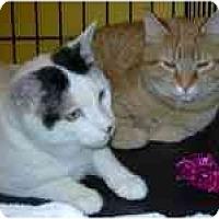 Adopt A Pet :: Reno & Vegas - Arlington, VA