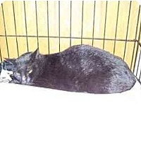 Adopt A Pet :: Seeley - Syracuse, NY