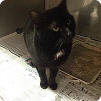 Adopt A Pet :: Boo - Lancaster, VA
