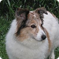 Adopt A Pet :: Kiya - Charlottesville, VA