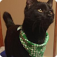 Adopt A Pet :: Ryan - Tiffin, OH
