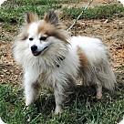 Adopt A Pet :: AUDREY HEPBURN