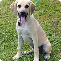 Adopt A Pet :: *Opal - PENDING - Westport, CT