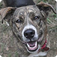 Adopt A Pet :: Sammy - Atlanta, GA