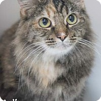 Adopt A Pet :: Clarice - Merrifield, VA