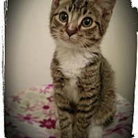 Adopt A Pet :: RazzleDazzle - Richmond, VA