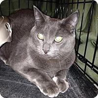 Adopt A Pet :: Mouse - Modesto, CA